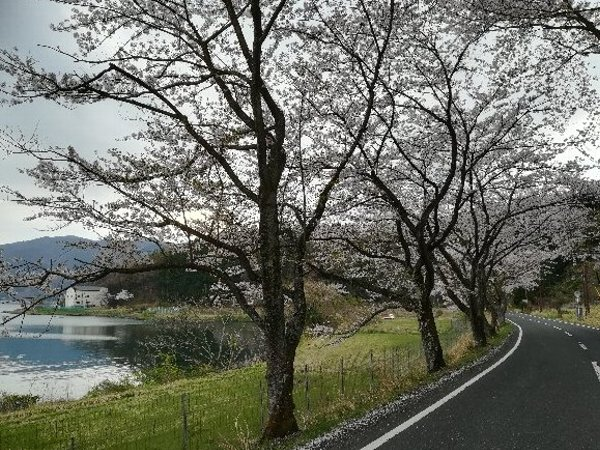 okubiwako2-sakura-007.jpg