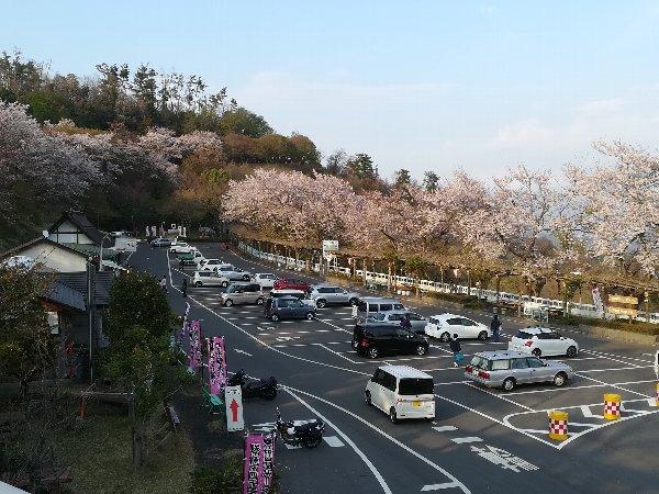 okubiwako2-sakura-035.jpg