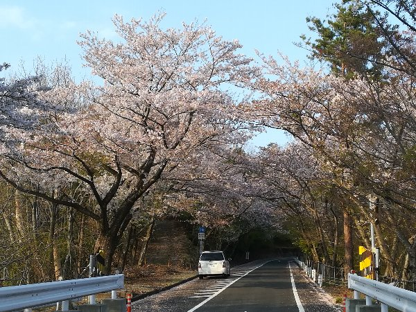 okubiwako2-sakura-040.jpg