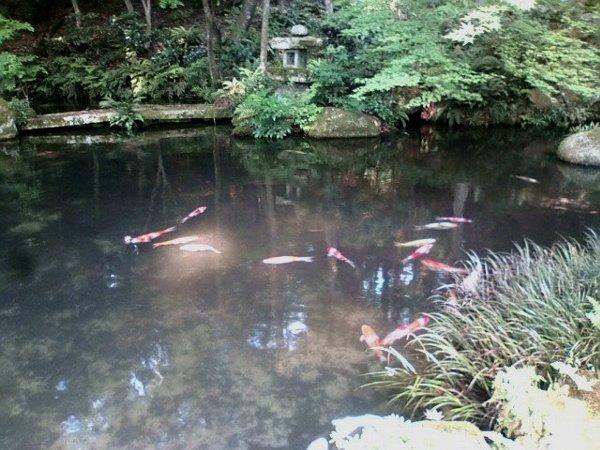 sanzenin-kyoto-035.jpg