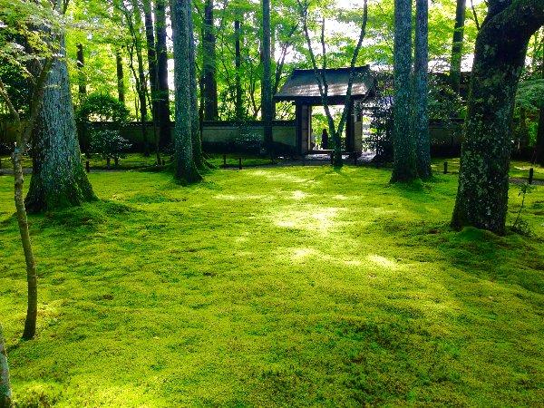sanzenin-kyoto-045.jpg