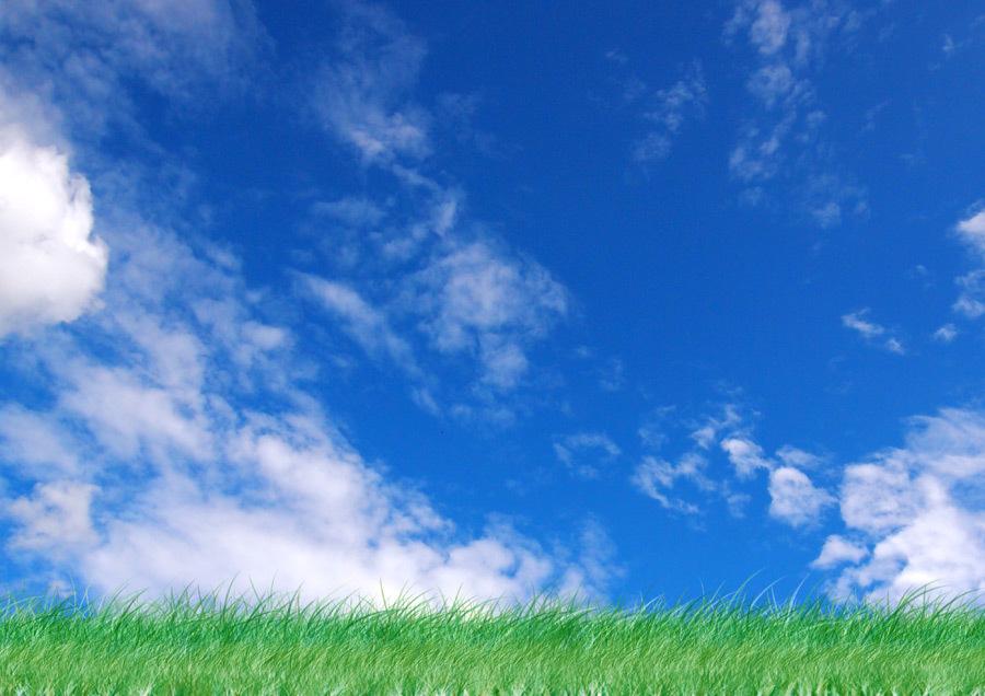 夏の空と草