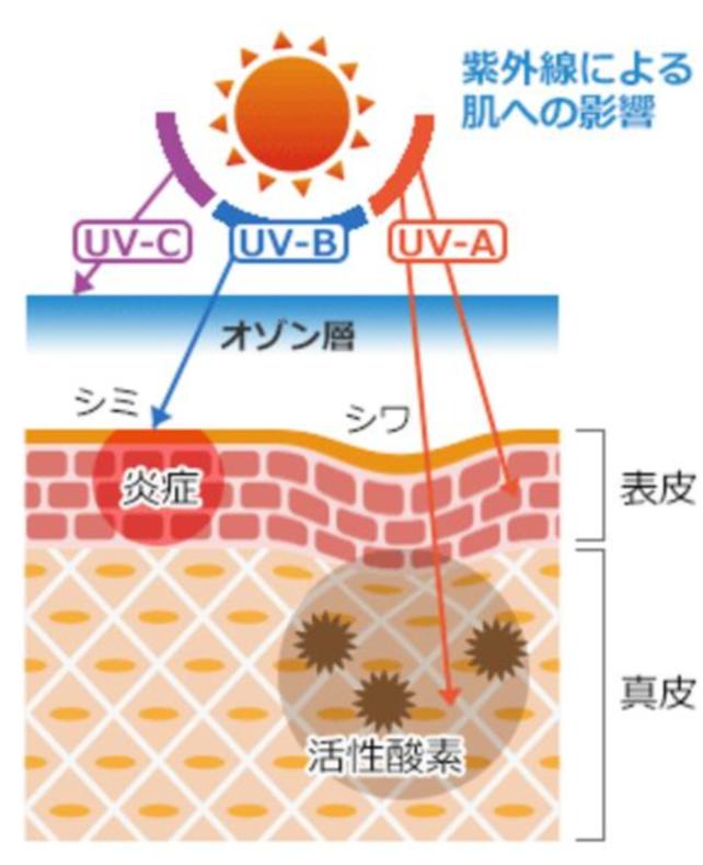 紫外線お肌への影響