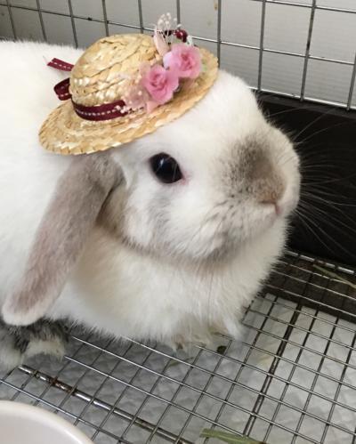 なな 麦わら帽子
