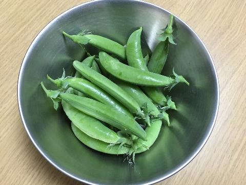 20180403 えんどう豆