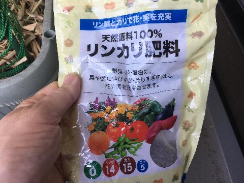 20180421 えんどう豆④
