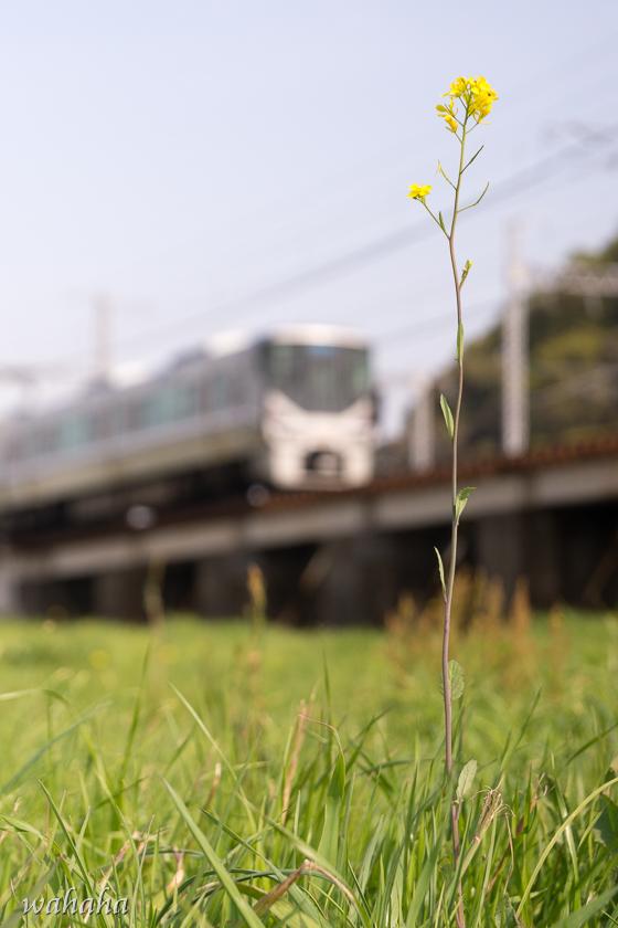300410ichikawa-1.jpg