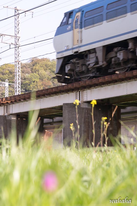 300410ichikawa-2.jpg