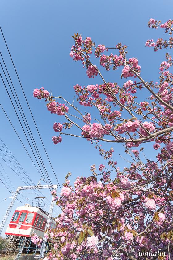 300413sintetsu_minogawa-2.jpg