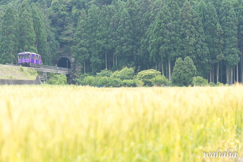300528chizu-1.jpg