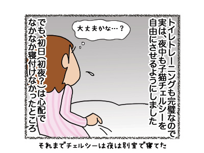 01062018_cat1.jpg