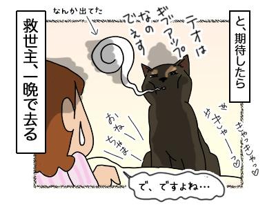 01062018_cat4.jpg