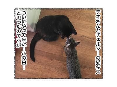 02052018_cat1.jpg