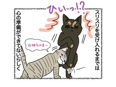 02052018_cat2.jpg