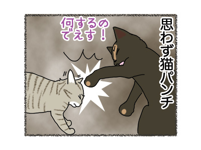 02052018_cat3.jpg