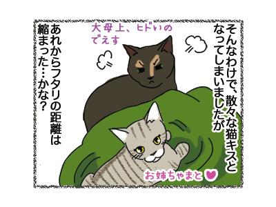 02052018_cat6.jpg