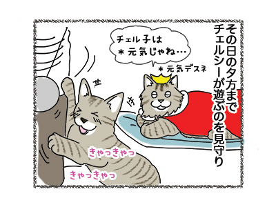 04062018_cat1.jpg