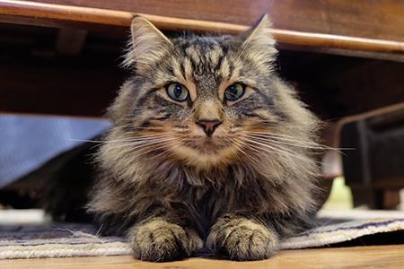 04072018_cat5.jpg