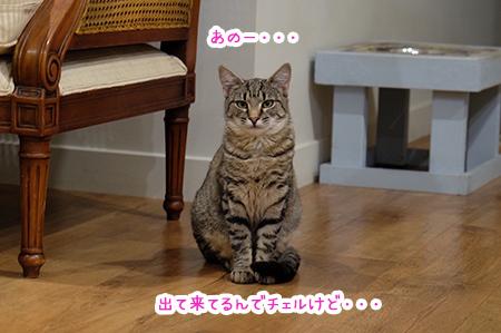 04072018_cat6.jpg