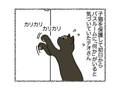 05042018_cat1.jpg