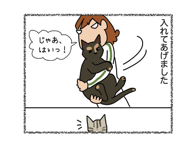 05042018_cat3.jpg