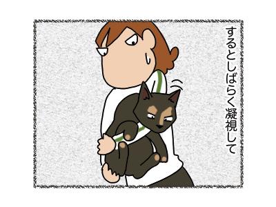 05042018_cat4.jpg