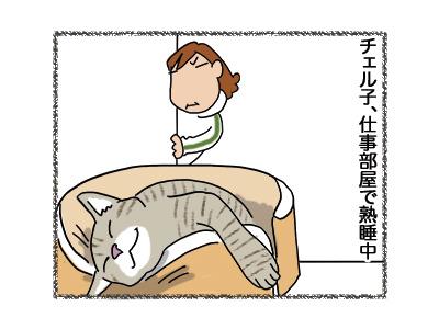 05062018_cat3.jpg