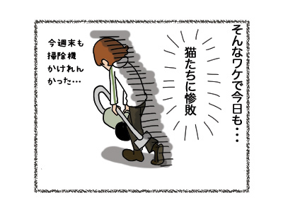 05062018_cat4.jpg