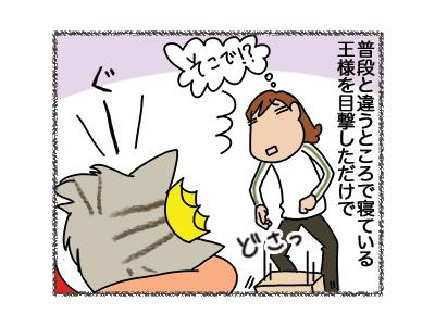 06042018_cat1.jpg