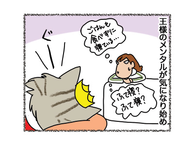 06042018_cat2.jpg