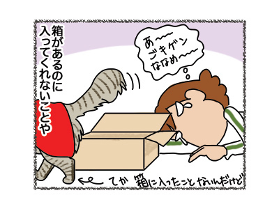 06042018_cat3.jpg