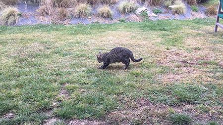 06062018_cat2.jpg