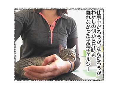 07052018_cat1.jpg