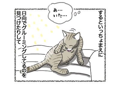 07052018_cat3.jpg
