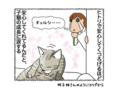 07052018_cat4.jpg