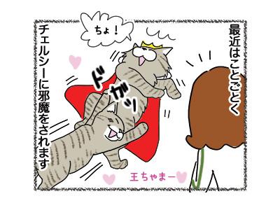 07062018_cat2.jpg