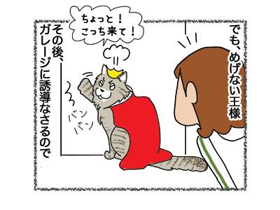 07062018_cat3.jpg