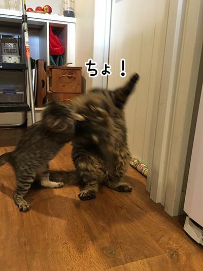 08062018_cat4.jpg