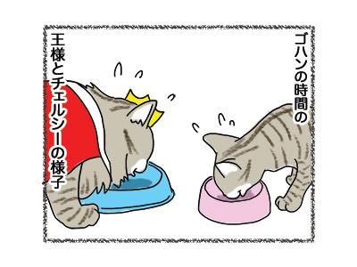 09062018_cat1.jpg