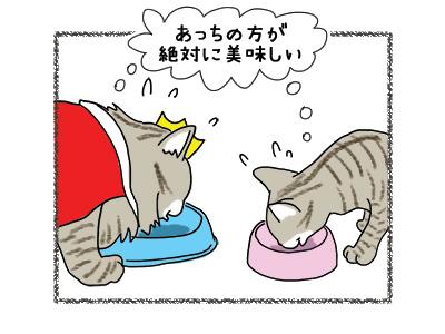 09062018_cat2.jpg