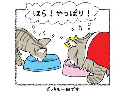 09062018_cat4.jpg
