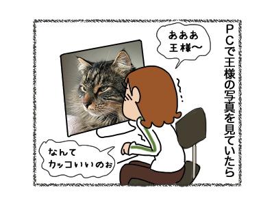 10072018_cat1.jpg