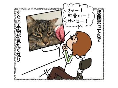 10072018_cat2.jpg