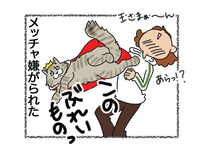 10072018_cat4mini.jpg