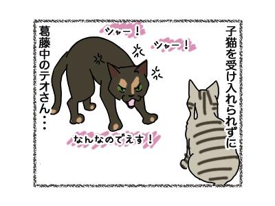 11042018_cat1.jpg