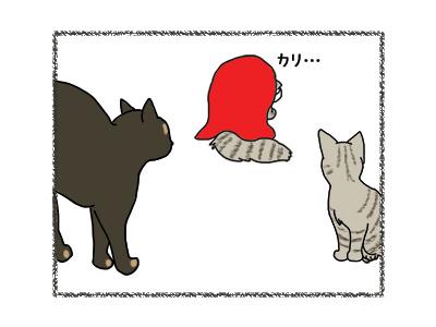 11042018_cat4.jpg