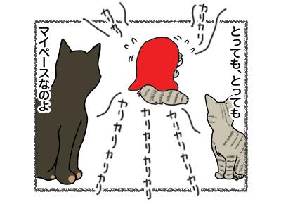 11042018_cat5.jpg