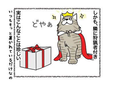 11052018_cat3.jpg