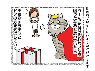 11052018_cat4.jpg