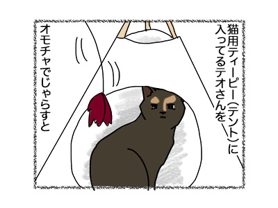 11062018_cat1.jpg